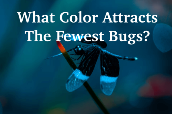 What Color Attracts the Fewest Bugs? 2 Colors For avoiding Bugs