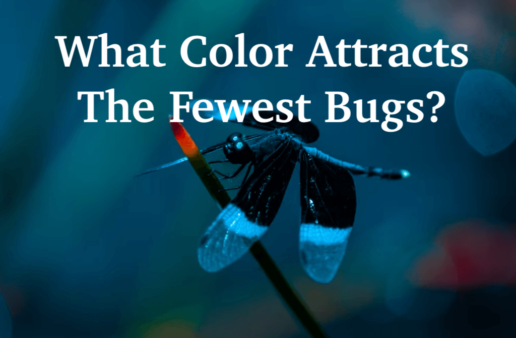 What Color Attracts The Fewest Bugs?