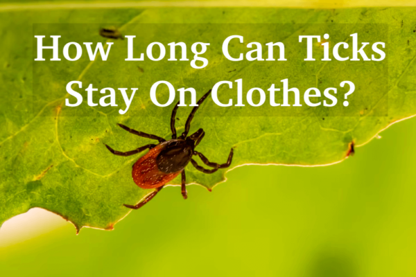 How Long Can Ticks Stay On Clothes? And 2 Ways to Avoid Them